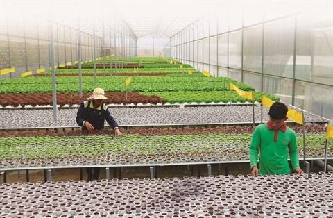 L'agriculture high-tech, cle de la restructuration economique hinh anh 1