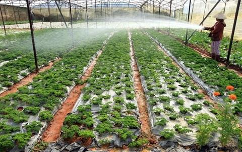 L'agriculture high-tech, cle de la restructuration economique hinh anh 2