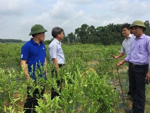 La culture des plantes medicinales creuse son sillon a Soc Son hinh anh 1