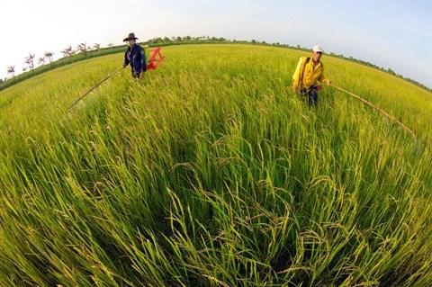 Le bio made in Vietnam a la conquete des marches etrangers hinh anh 2