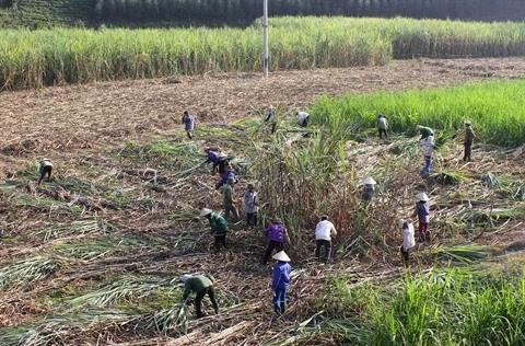 L'industrie sucriere cherche a mieux s'integrer dans la region hinh anh 2