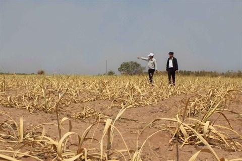 Le Vietnam cherche a se proteger face a la meteo extreme hinh anh 1