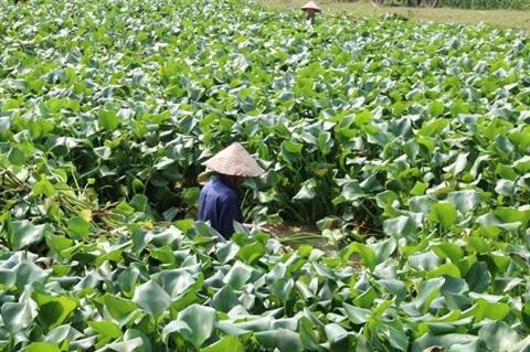Un Professeur belge donne son expertise sur l'agriculture high-tech du Vietnam hinh anh 3