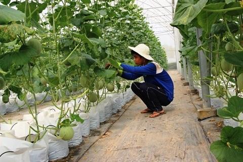 Un Professeur belge donne son expertise sur l'agriculture high-tech du Vietnam hinh anh 2