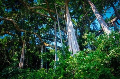 La Reserve naturelle de Son Tra protege ses doucs a pattes rousses hinh anh 2