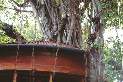 Le cafe qui se perche sur des arbres seculaires a Ho Chi Minh-Ville hinh anh 2