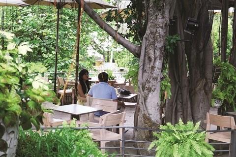Le cafe qui se perche sur des arbres seculaires a Ho Chi Minh-Ville hinh anh 3
