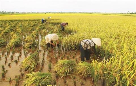 Le Vietnam exportera 4 millions de tonnes de riz en 2030 hinh anh 1