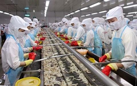 Les exportateurs de crevettes misent sur le marche de fin d'annee hinh anh 1