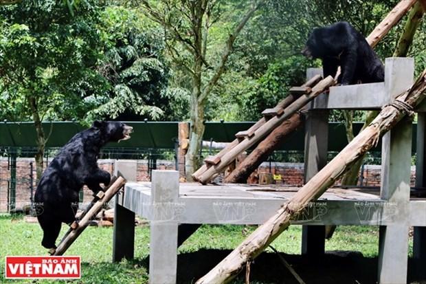 Plan bien leche pour les ours dans la zone tampon a Tam Dao hinh anh 4