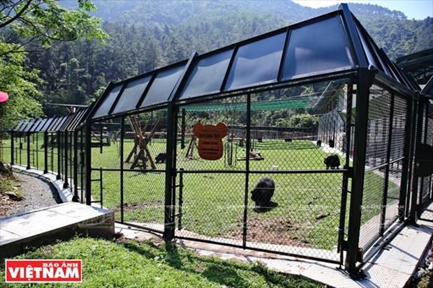 Plan bien leche pour les ours dans la zone tampon a Tam Dao hinh anh 1