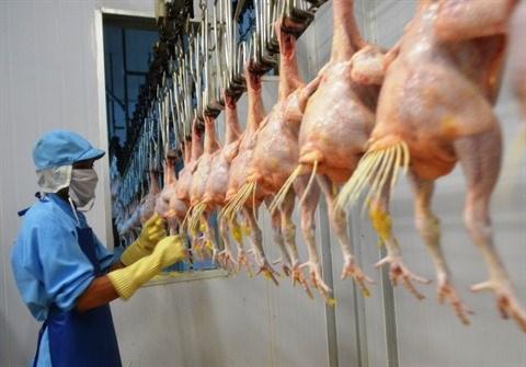 Le Vietnam exportera pour la premiere fois de la viande de poulet au Japon hinh anh 1