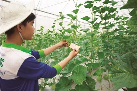 La culture du melon se branche sur la high-tech a Tay Ninh hinh anh 2