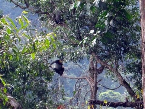 Plongee au cœur de Chu Mom Ray, royaume des primates hinh anh 2