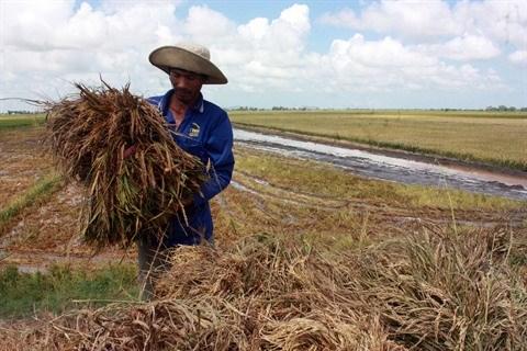 Les agricultrices vietnamiennes face aux changements climatiques hinh anh 2