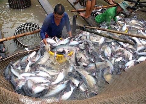 Les exportations de pangas vietnamiens aux Etats-Unis se redressent hinh anh 1