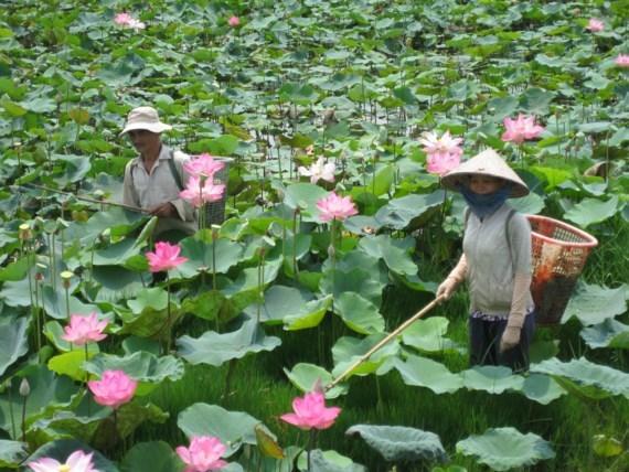 Ouverture de la Fete des fleurs de lotus a Dong Thap hinh anh 1