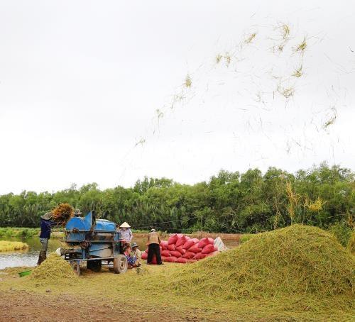 L'australien Sunrice veut se renforcer dans le riz a Can Tho hinh anh 1