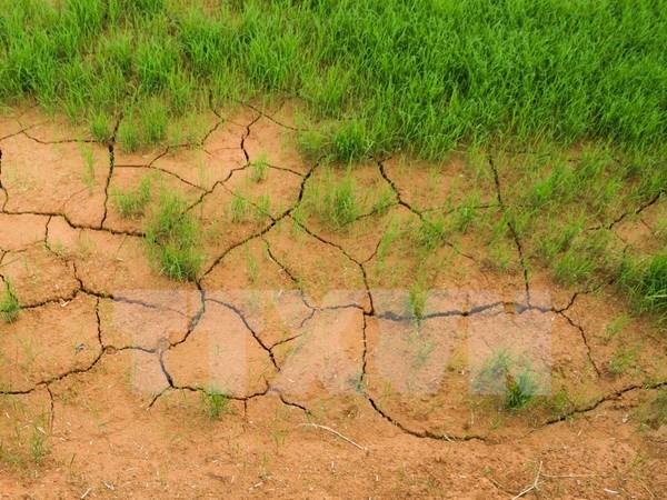 Environnement : le Vietnam partage ses politiques lors d'un sommet regional hinh anh 1