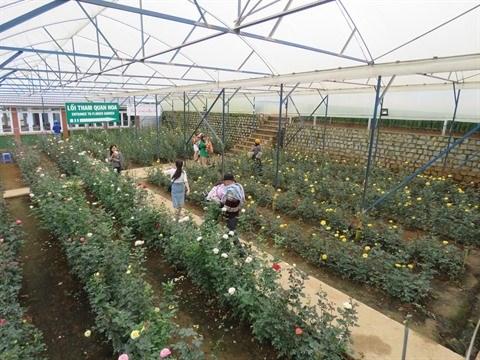 Florilege de couleurs au village horticole de Van Thanh a Da Lat hinh anh 1