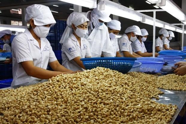 La noix de cajou vietnamienne appreciee sur le marche americain hinh anh 1