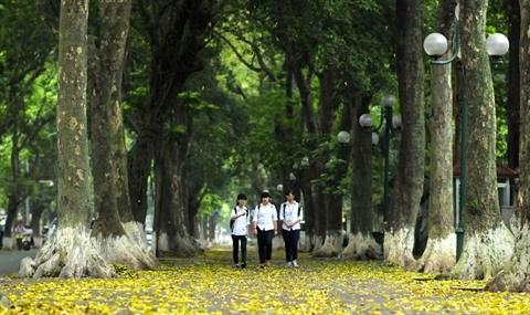 La diversite des arbres de Hanoi hinh anh 1