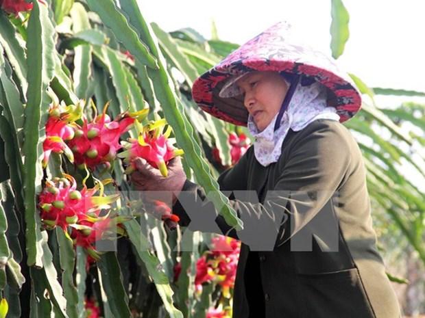 La Chine intensifie l'importation de produits agricoles du Vietnam hinh anh 1