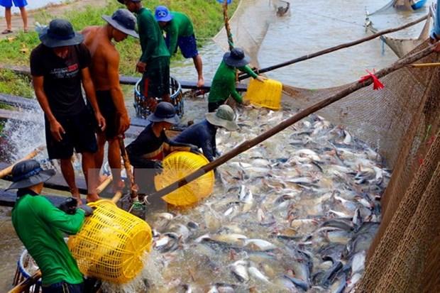 Vietnam-Algerie : acceleration de cooperation dans la peche et l'aquaculture hinh anh 1