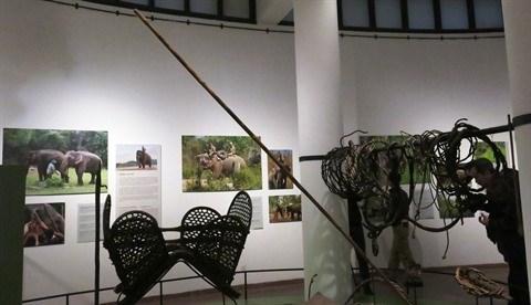 Les elephants des Hauts Plateaux du Centre stars d'une exposition a Hanoi hinh anh 2