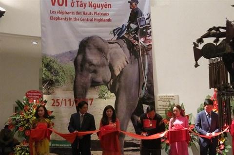 Les elephants des Hauts Plateaux du Centre stars d'une exposition a Hanoi hinh anh 1