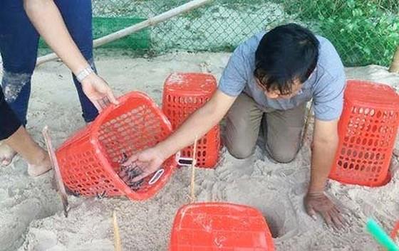 Les tortues marines beneficient d'un coup de pouce salvateu hinh anh 3