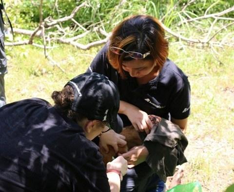 L'eco-benevolat au secours des animaux sauvages a Dak Lak hinh anh 1