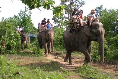 L'eco-benevolat au secours des animaux sauvages a Dak Lak hinh anh 2