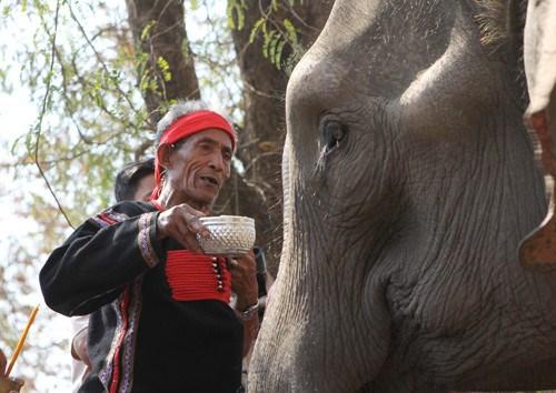 Les elephants chez les M'Nong hinh anh 1