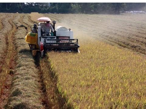 Adapter l'agriculture au changement climatique hinh anh 1