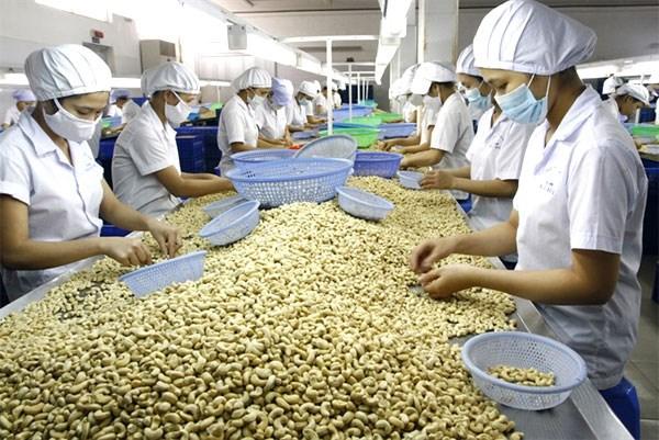 Le Vietnam exporte 3,52 milliards de dollars de noix de cajou en 2017 hinh anh 1