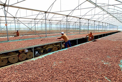 Vietnam - Belgique: cooperation renforcee dans l'agriculture hinh anh 2