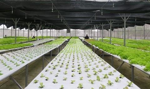 Les entreprises japonaises cherchent a doper leurs exportations agricoles au Vietnam hinh anh 3