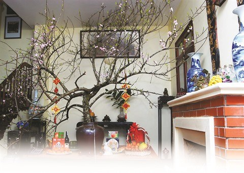 Des fleurs et plantes pour accueillir le printemps en beaute hinh anh 2