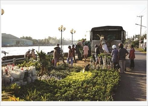 Le village floral de Tan Quy Dong resplendit de couleurs hinh anh 3