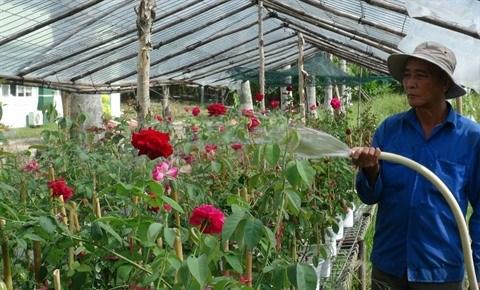 Le village floral de Tan Quy Dong resplendit de couleurs hinh anh 1