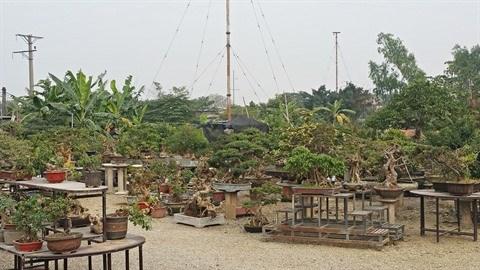 Decouvrez l'art du bonsai dans l'ancien village de Trieu Khuc hinh anh 1