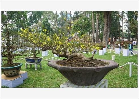 Festival des fleurs de Tao Dan, retour au printemps au Sud hinh anh 3