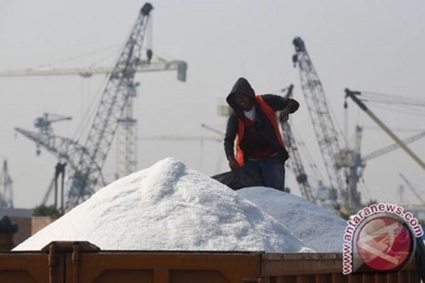 L'Indonesie etudie la possibilite de suspendre l'importation de sel en 2020 hinh anh 1