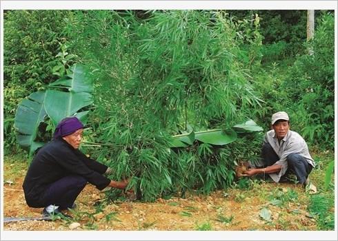 A Ha Giang, les Pu Peo celebrent le genie de la foret hinh anh 1