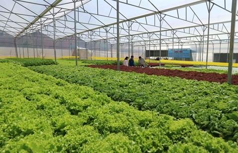 L'agriculture laboure le sillon des hautes technologies hinh anh 3
