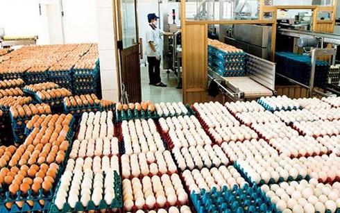 Le MOIT annonce les contingents tarifaires d'importation de sel et d'œufs hinh anh 1