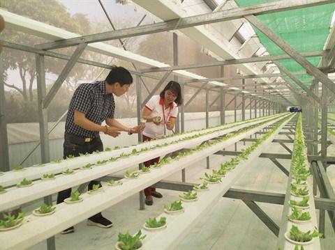 Le parc des logiciels Quang Trung vers un modele urbain vert et intelligent hinh anh 2