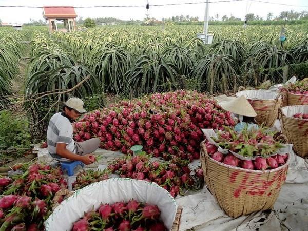 L'Australie aide le Vietnam dans le developpement agricole hinh anh 1