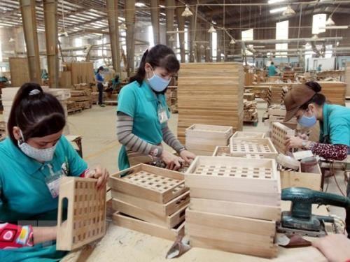 La filiere bois pourrait exporter pour 9 milliards de dollars hinh anh 1